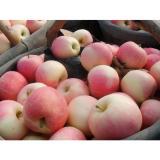 Crisp Juicy Fresh Gala Apple No Residual Pesticide For Preventing Prostate Cancer, Fruit medium - large
