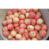 Clean Smooth Fresh Fuji Apple No Spots Contains Vitamin E , Protein, Early results saplings, High fruit setting rate