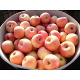 Delicious Red Fresh Fuji Apple Containing Rich Vitamin C Up To 8.5cm