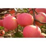 Fresh Organic Crisp Large Fuji Apple Containing Sugars For Market, core transparent
