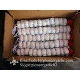 Jinxiang Shandong Fresh Normal White Garlic 5cm Small Packing in Carton Box