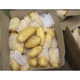 Organic Fresh Potato Holland Health Benifits With No Pollution