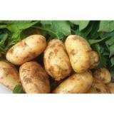 Yellow Long Organic Potatoes , Cold Storage Potato For Supermarket, eating fried crisp, Fried strips not broken