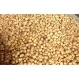 Long Fresh Holland Potato Contains Vitamins / Minerals For Vegetable Fruit