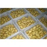 Healthy Benifits Organic Potato Yellow Flesh Contains High Energy