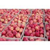 Vitamins such as riboflavin, thiamin, and pyridoxine (vitamin B-6) good in tartaric acid Large Fuji Apple big and delici