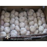 Best Quality 5.5cm Purple Normal White Garlic Packed In Carton Box