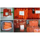 Chinese Sweet Bar Straight Organic Carrot With Round Tail , No Residual Pesticide