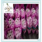2016 crop farmer best quality dehydrated garlic in China Fresh White Garlic