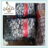 2016, stored normal garlic best chinese price garlic From China