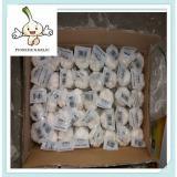 New crop pure white dry garlic fresh and dry normal white garlic