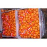 Organic Health Benifit Fresh Mandarin Oranges Contains Energy Iron , Zinc , Sodium
