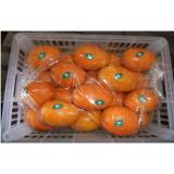Organic Sweet Juicy Round Fresh Navel Orange / Ponkan Orange With High Energy, Flesh tender and crisp
