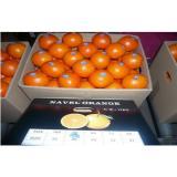 Fresh Navel Blood Orange , Honey Orange Contains Citral , Vitamin A , No Chemical Pesticide