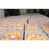Natural Sweet Seedless Fresh Navel Orange 95% Hesperitin For Refrigeration Stored
