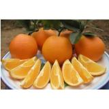 Vitamin C Fresh Navel Orange Seedless Contains Zinc , Protein For Long Time Stored, Smooth fruit surface