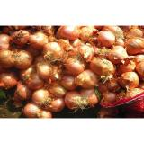 Small Red Asian Shallots Full-Flavoured For Canned , Caramelized, lower cholesterol